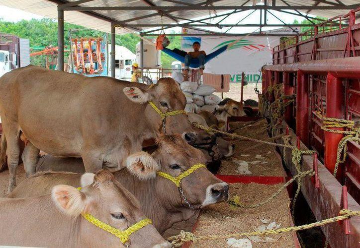 Los productores temen que la sequía prolongada y la falta de apoyo condene a gran parte de sus animales a enfermarse y morir.