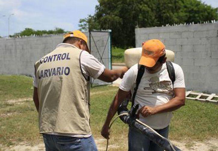Se están agudizando las acciones de nebulización y la aplicación de abate en colonias ubicadas sobre todo en el norte de la capital del estado. (Harold Alcocer/SIPSE)