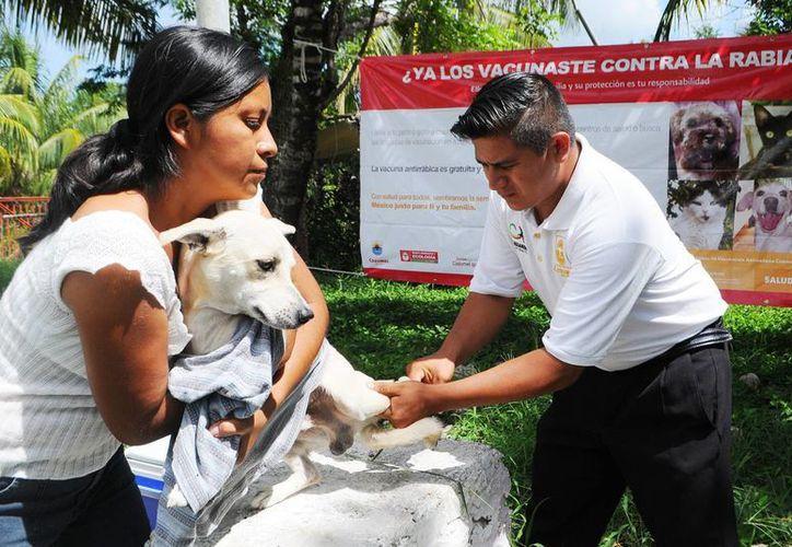 La campaña de vacunación antirrábica inició el pasado 10 de marzo. (Cortesía/SIPSE)