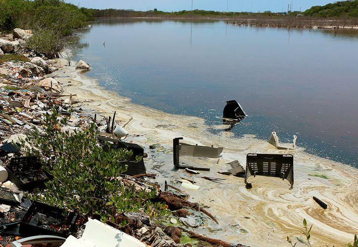 El aceite quemado ha formado una gruesa capa en la ciénaga de Progreso y las autoridades no hacen nada para frenarla. (José Acosta/SIPSE)