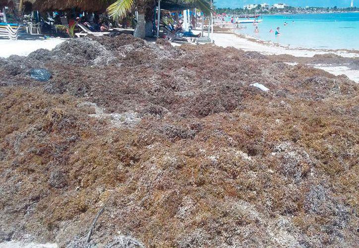 La Costa Maya es vulnerable por la baja circulación del agua en algunos puntos. (Joel Zamora/SIPSE)