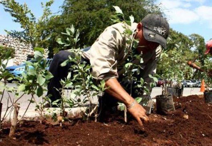Quintana Roo se une al programa de reforestación de la República Mexicana. (Redacción/SIPSE)
