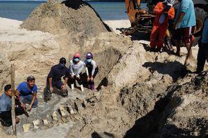Preparan esqueleto de ballena para exponer en museo en Yucatán