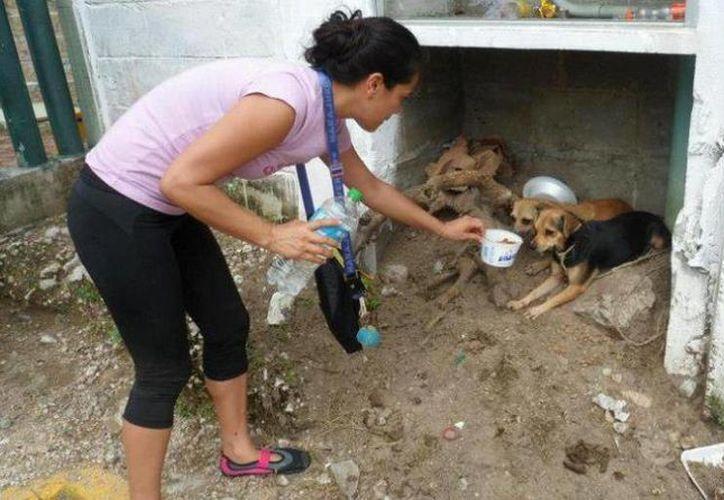 Se unen organizaciones del DF y Acapulco para ayudar a los olvidados de las tragedias: las máscotas. (MILENIO/Patitas felices)