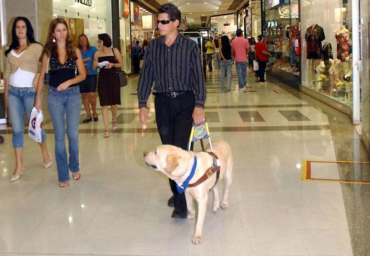 Un ciego acompañado de su perro guía en Brasil. (Wikipedia)