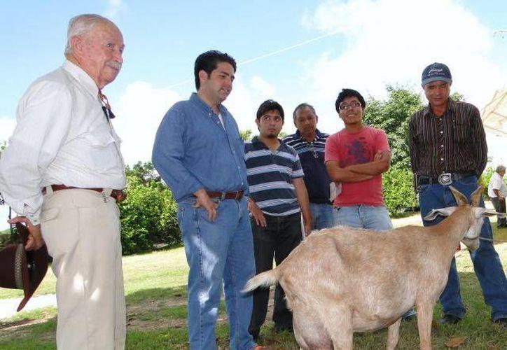 Según la Fundación Produce Yucatán, la leche de estos animales es muy alta en nutrientes, por lo que mejora considerablemente la dieta de quien la toma. (Archivo SIPSE)