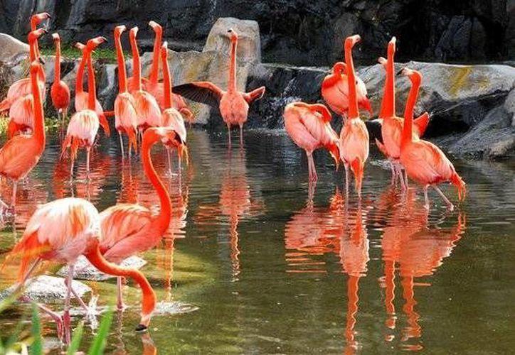 Muchos hábitat naturales de los flamencos están bajo amenaza como consecuencia de la actividad humana. (ansa.it)