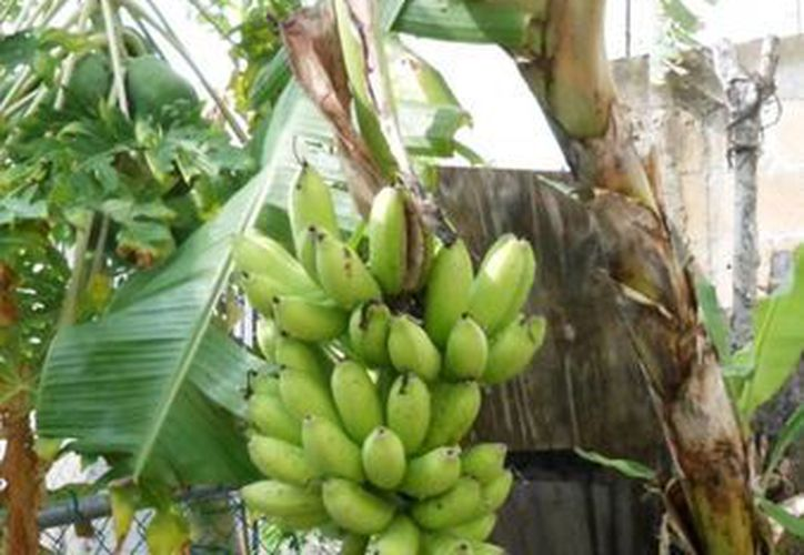 Gran parte de los productores locales quedan fuera de los apoyos de la Sagarpa por no tener el documento que abale que son dueños de sus predios.  (Yesenia Barradas/SIPSE)