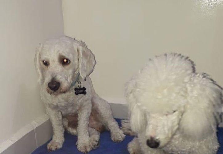 Las dos mascotas de la familia infractora serán dados en adopción por el Cebiam, para prevenir futuros ataques; una de ellas presenta temor por el maltrato. (Adrian Barreto/SIPSE)