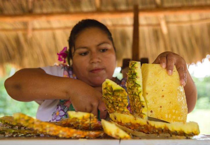 El cultivo de la piña se está convirtiendo en una verdadera opción productiva de agricultores de distintas zonas de Bacalar. (Foto: Javier Ortiz  / SIPSE)