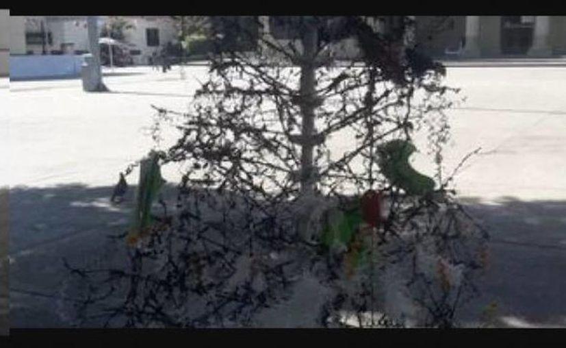 El llamado Árbol de la Justicia se encontraba en el Zócalo. (vanguardia.com)