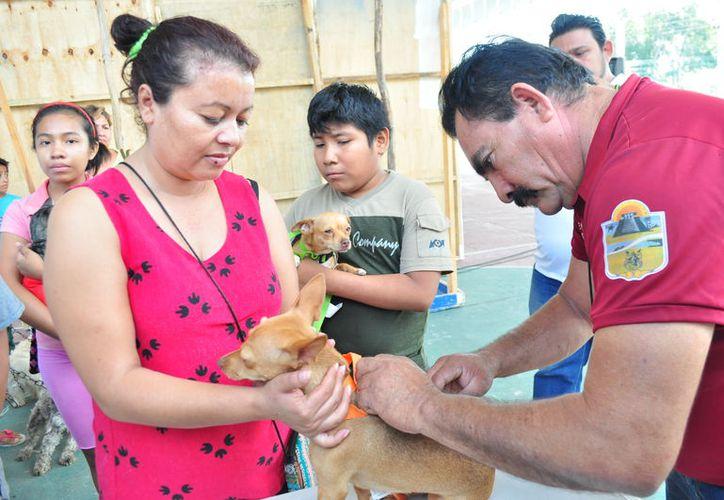 Las asociaciones iniciaron una campaña de esterilización para gatos y perros. (Cortesía)