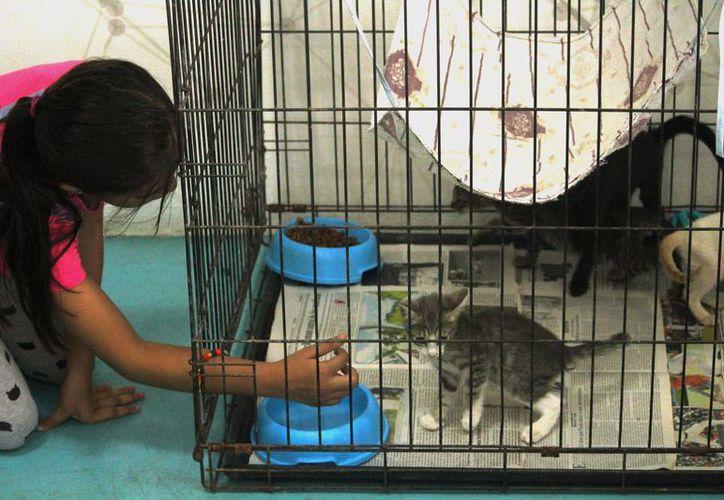 La feria busca aumentar la adopción de animales callejeros y fomentar el cuidado de mascotas. (Foto: Octavio Martínez/SIPSE)
