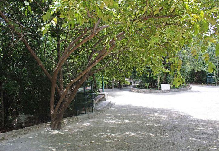 Los árboles urbanos contarán con protección en el estado. (Jesús Tijerina/SIPSE)