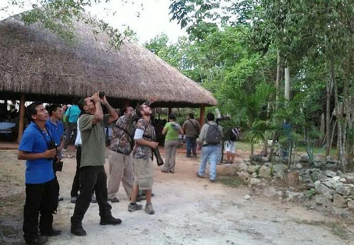 El avistamiento de aves se llevó a cabo en la Reserva de Toh, en la Ruta de los Cenotes en Quintana Roo. (Licety Díaz/SIPSE)