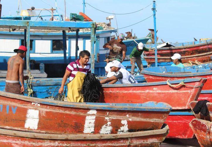 Los hombres de mar de Progreso acatan la restricción pesquera de la veda del mero. Imagen de contexto de un grupo de pescadores en la costa de Yucatán. (Milenio Novedades)