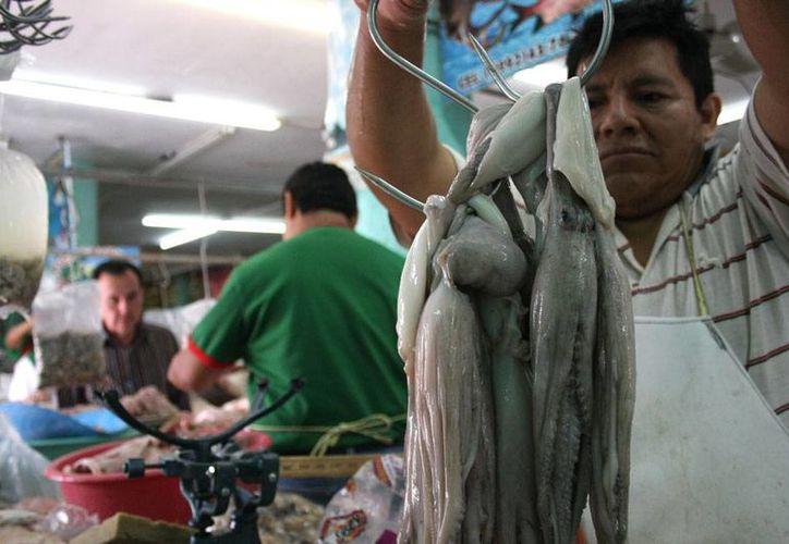 La captura de pulpo en Yucatán rebasa las 12 mil toneladas en los que va de la temporada 2015. (Archivo/Milenio Novedades)