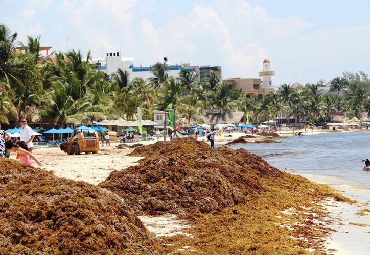 La dependencia atiende seis casos diarios de irritación en la piel de los turistas. (Octavio Martínez/ SIPSE)