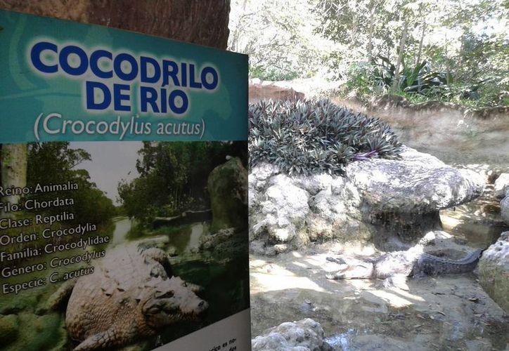 El edil capitalino desconoce si la Profepa puede retirarle la UMA al parque zoológico. (Harold Alcocer/SIPSE)