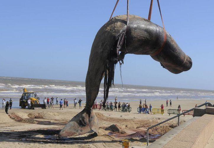 Cientos de personas presenciaron el retiro del animal, pese al fuerte olor que despedía. (Agencias)
