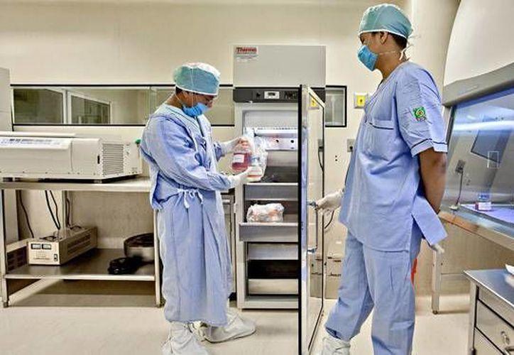 Los tejidos son sometidos a rigurosos procesos de certificación microbiológica. (amqueretaro.com)