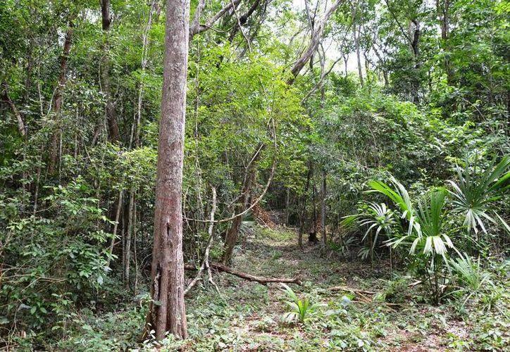 Se han hecho diferentes actividades como: proteger la superficie  en contra de los incendios forestales. (Edgardo Rodríguez/SIPSE)