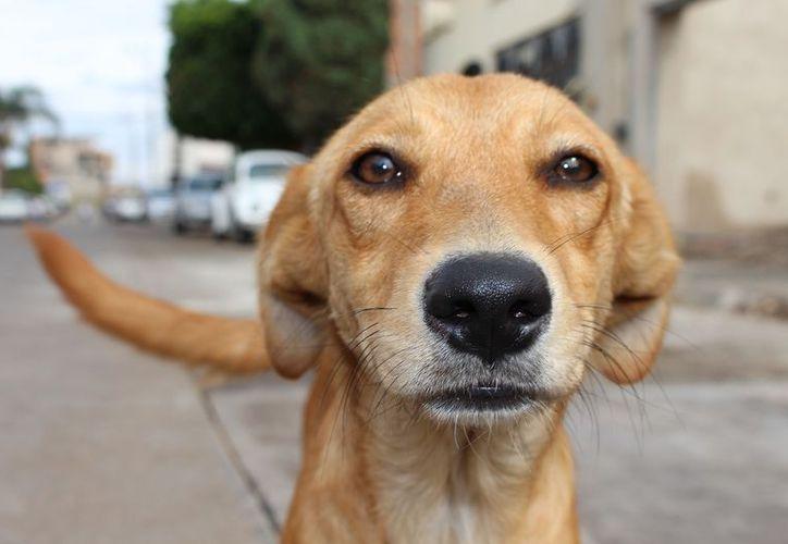 La actitud leal del can hacia su dueño lo ha convertido en todo un fenómeno viral. (Foto: contexto)