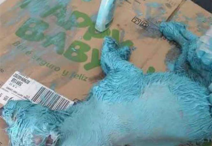 Animalistas presentarán una denuncia penal por maltrato y crueldad. (Foto: Excelsior)