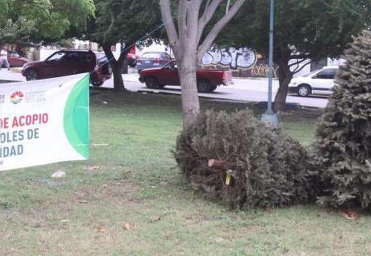 Piden a la población  llevar el tronco limpio y con ramas en una bolsa negra. (Redacción/SIPSE)