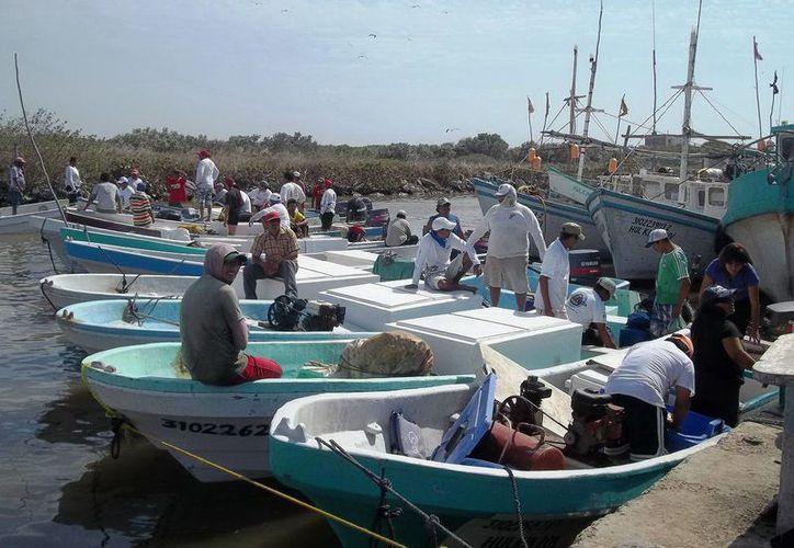 Ante el aumento de pescadores en Dzilam de Bravo, hay productos que casi se venden al doble de su precio.  (Milenio Novedades)