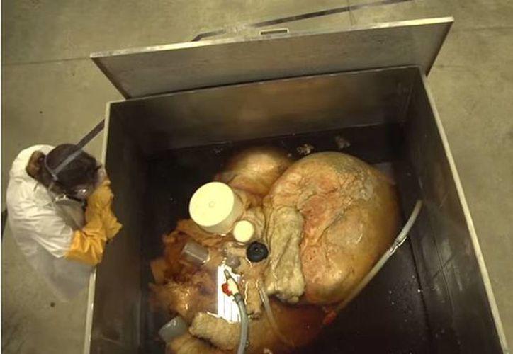 Expertos se encuentran estudiando el corazón de una ballena azul, el cual se encuentra en un tanque que contiene casi cuatro mil litros de formaldehído. (Captura de pantalla YouTube)