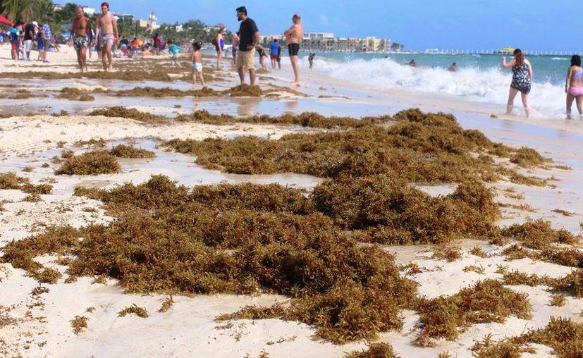 Mencionan que la imagen que deben llevarse los turistas es de playas limpias y es algo que no ocurre. (Octavio Martínez/SIPSE)