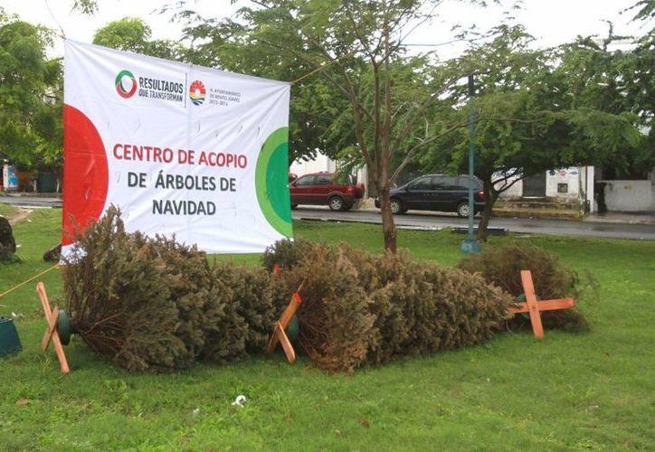 Los habitantes podrán dejar los árboles ornamentales en los 45 centros de acopio, que se encuentran distribuidos por toda la ciudad. (Cortesía)
