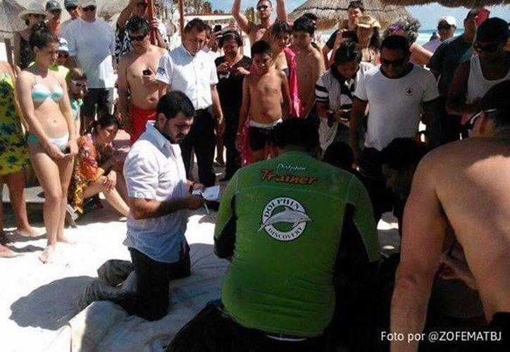 Las autoridades supervisaron el traslado del delfín a Isla Mujeres. (Zofemat de Benito Juárez)