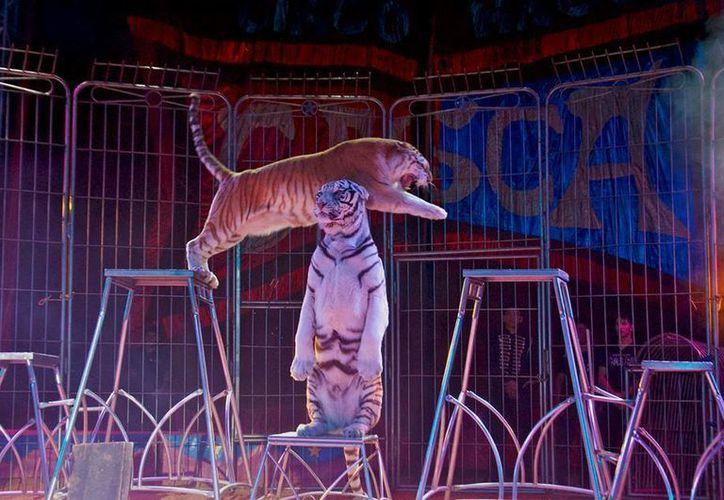 El deseo de regresar al país por parte de uno de los circos de mayor tradición en México, como el de los Hermanos Gasca, es frenado por las leyes de protacción a los animales. (Imágenes ilustrativas/ Tomadas del Facebook: Circo Hermanos Gasca)