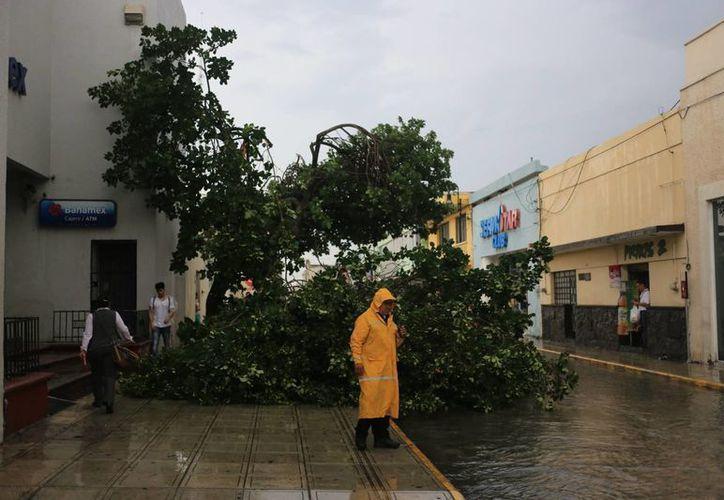 Mérida es vulnerable a fenómenos meteorológicos, como la turbonada que afectó el jueves pasado la ciudad, que dejó varios árboles caídos. (Mauricio Palos/SIPSE)