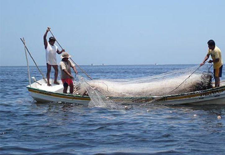 Incrementa el número de embarcaciones que se dedican a la pesca. (archivo.unionyucatan.mx)