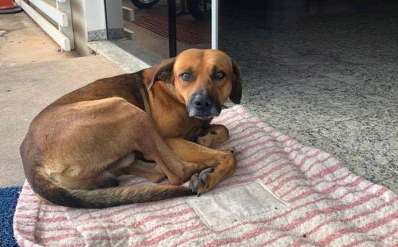 Perro espera hace cuatro meses por su dueño frente a un hospital