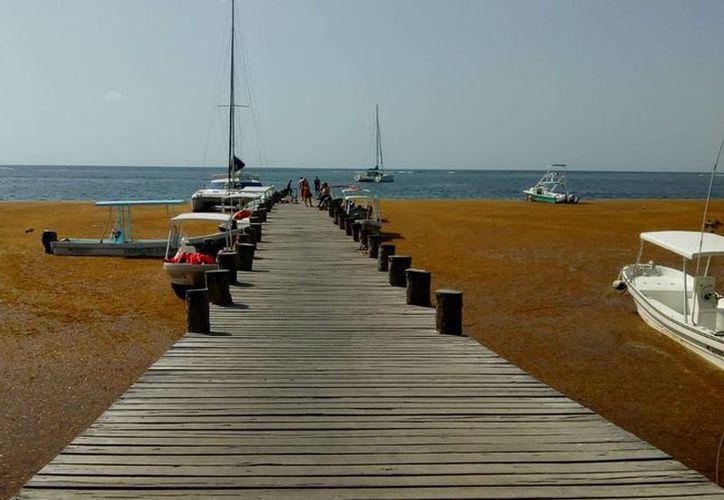 Puerto Morelos.- La cantidad de sargazo registrada en el Estado es histórica. (Javier Brito)