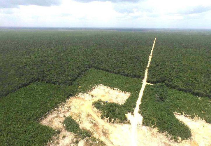 La empresa constructora ABC hizo una brecha de 3 Km. en el predio Balamtun para llegar a la zona en donde realiza el desmonte. (Cortesía)
