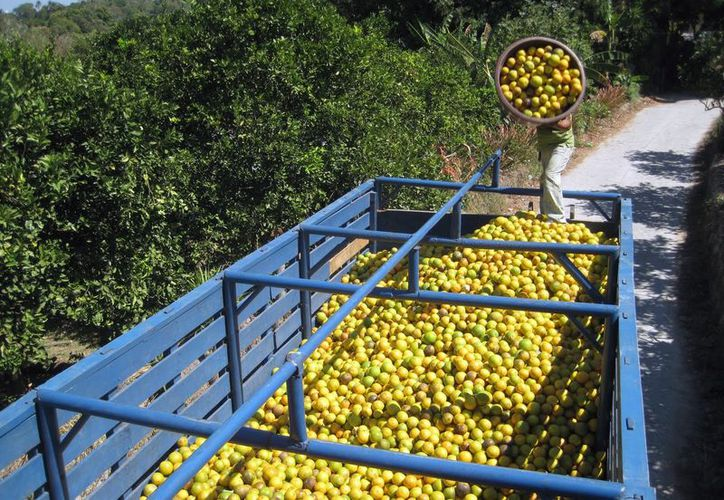 A través de las campañas se informa a los productores sobre los cuidados que se deben tener en los cultivos. (Carlos Castillo/SIPSE)