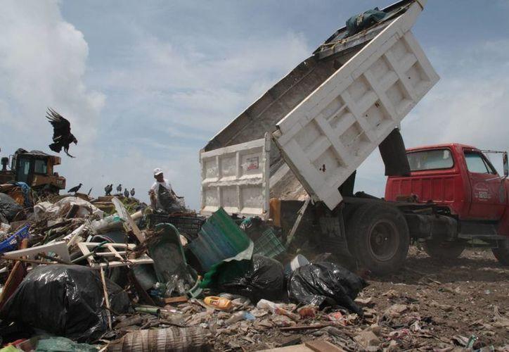 Promotora Ambiental de la Laguna presta el servicio de recolección de desechos. (Julián Miranda/SIPSE)