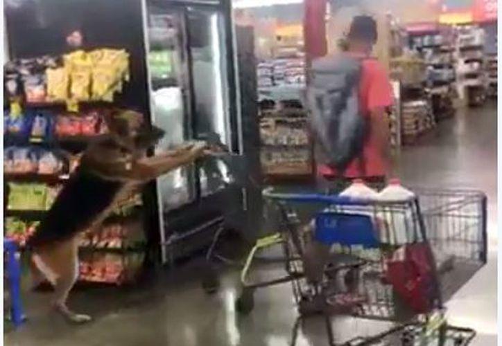 El perrito va empujando en dos patas el carrito de supermercado. (Foto: Twitter)