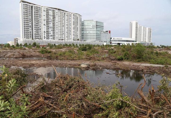 Mencionan ambientalistas que el mangle está en rehabilitación.  (Redacción/SIPSE)