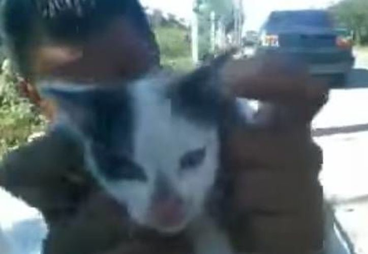 A través de un video José Luis Díaz hizo público su arrepentimiento por grabar el maltrato a un gatito. (Facebook/Olaf navarrete veterinario)
