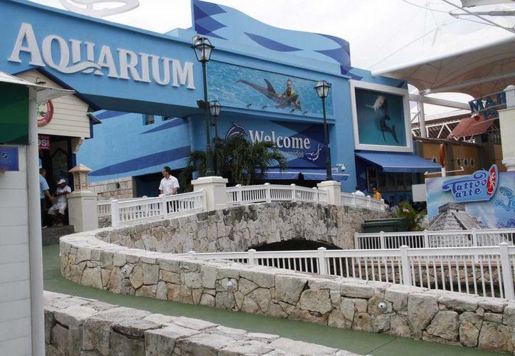 Los cuatro ejemplares del Acuario de plaza La Isla de Cancún que murieron en diciembre, son analizados. (Tomás Álvarez/SIPSE)