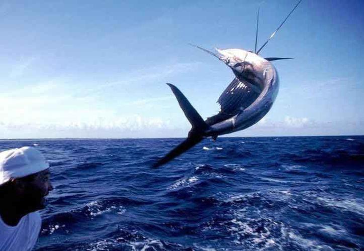 En Quintana Roo se han iniciado equipos que luego participan en torneos de pesca internacionales. (Redacción/SIPSE)
