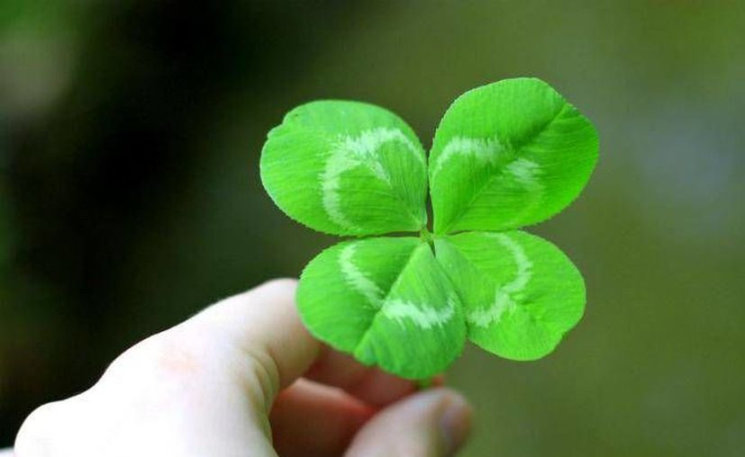 Según un estudio científico la buena suerte depende mucho de la actitud positiva ante la vida. (dineroenimagen.com)
