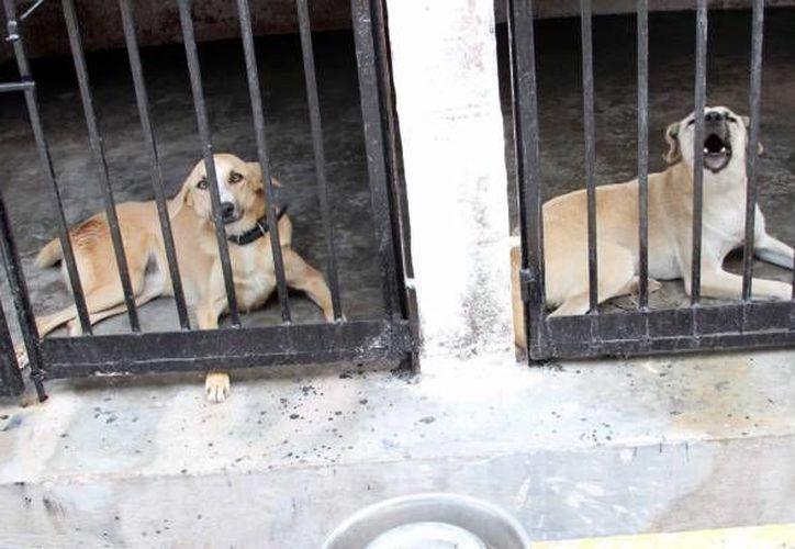 El Centro de Atención Canina (CAC) operaría con 7 millones de pesos en caso de que la iniciativa sea aceptada. (Archivo/SIPSE)