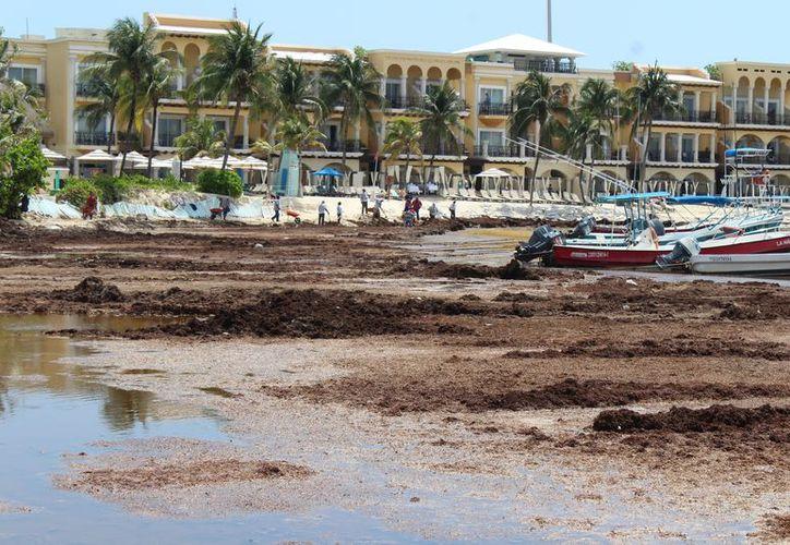 El sargazo y la erosión deterioran la costa de la zona centro de la ciudad. (Adrián Barreto/SIPSE)